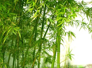 BAMBOO Wallpaper__yvt2